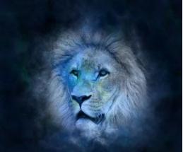 Lion voyance corse